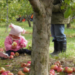 Apple picking at Solebury Orchards in New Hope